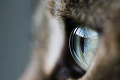Project 365 [9/365]: Eye Eye Eye (kicksie) Tags: cats macro reflection green eye cat tamron90mm 30d billiam project365 9365 project36612010 jan92010 01092010