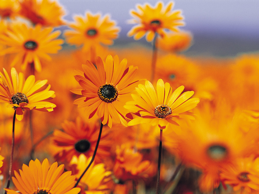 Sfondi Desktop Primavera Gratis Natura E Paesaggio Con Fiori Vista