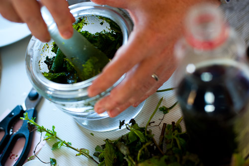Making mint sauce, Auckland