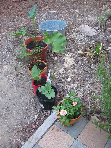 Repotting the garden