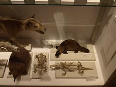 Marsupials