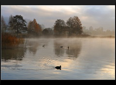 Harmony at Daybreak (our cultural archive) Tags: mist lake nature water reflections germany landscape bayern deutschland bavaria wildlife earlymorning ducks cate copenhaver flickrdiamond oarsquare lakeweissensee