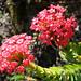 Table Mountain Flora