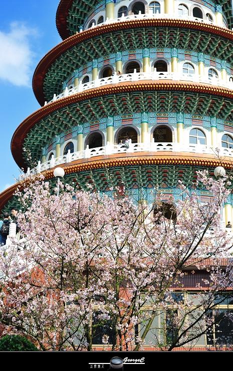 Sakura sunny 10