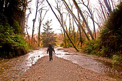 Lonely Hiker at the end of Fern Canyon (kmanohar) Tags: california northerncalifornia worldheritagesite westcoast humboldtcounty pacificcoast californiacoast redwoodnationalpark ferncanyon northerncaliforniacoast temperaterainforest prairiecreekstatepark prairiecreek redwoodpark prairiecreekredwoods redwoodcoast humboldtcountyca humboldtcountycalifornia prairiecreekredwoodsstatepark redwoodsstatepark pacificrainforest klamathcalifornia homecreek prairiecreekpark internationalbiospherereserve lonehiker redwoodpreserve westerncanyon lonelyhiker californiarainforest northwestrainforest redwoodreserve cascadiacoast coastalcanyon californiacanyon californiacoastalcanyon shorelinecanyon californiacoastcanyon humboldtcanyon humboldtcoastcanyon westcoastcanyon pacificcanyon coastcanyon humboldtcountycanyon pacificcoastcanyon