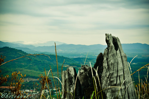 view from broga