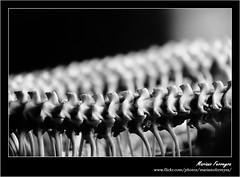 Coluna Vertebral! (Mariano Ferreyra) Tags: bw brasil canon flickr cobra snake sãopaulo pb zoológico abstrato serpiente 18200mm semtripé focoseletivo semflash eos50d canoneos50d vosplusbellesphotos canonefs18200mmf3556is marianoferreyra semveneno