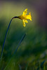 L'illuminato (Maver-71) Tags: flowers primavera nature fiori fiore controluce appennino appenninotoscoemiliano canon40d appenninosettentrionalealpinatura
