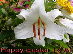 Happy Easter (Gloria1207) Tags: white flower macro leaves easter lily gloria1207
