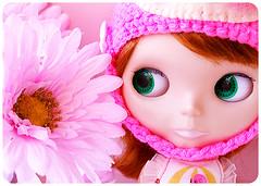 Plum & Pink Petals