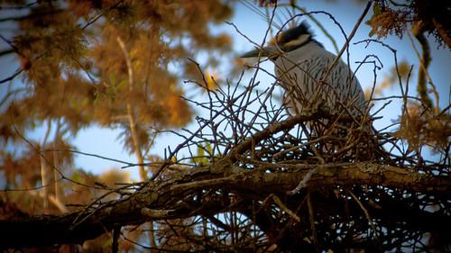 mikemcguff_birds-1450