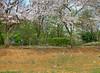 Sakura Falling (arcreyes [-ratamahatta-]) Tags: park japan canon spring sakura yokohama hdr hanami 2010 nakagawa canonef24105mmf4lisusm 5xp canon7d