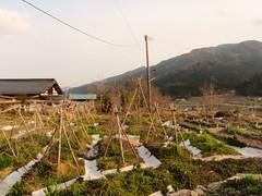 Le jardin de Mori No Ie