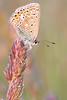 Return to Nature #2 (Marc Benslahdine) Tags: macro bokeh explore papillon lightroom canonef100mmf28macrousm canoneos50d marcopix tripax ©marcbenslahdine wwwmarcopixcom wwwfacebookcommarcopix marcopixcom