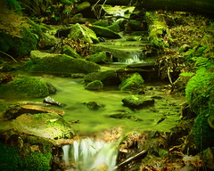 Stream in Allegany Park (robvacc716) Tags: park new york green water moss rocks stream olympus allegany 620