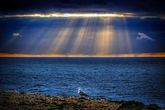 Beams of light (Kari Siren) Tags: beam ray sun sea bird ocean
