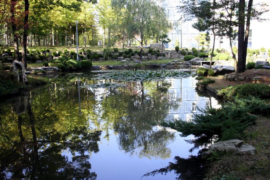 Lotus pond(1)
