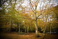 In The Woods (~FreeBirD®~) Tags: autumn trees love nature beauty freedom woods paradise natural free atmosphere harmony environment lover freebird madein inthewoods naturebeauty lovemax englishautumn manibabbar naturalharmony maniya