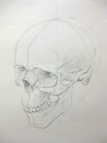 Study of the Skull