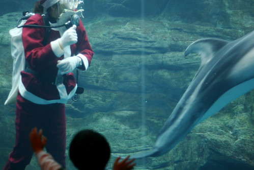 With Dolphin and entranced child