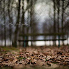 Les jours gris II [ Explore ] (Franck Tourneret) Tags: autumn trees cold leaves automne 50mm gris stand nikon sad gray explore triste arbres froid banc feuilles d700 carrfranais