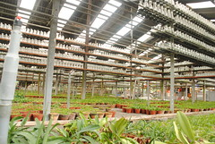 Orchid Nursery Section (View 2)