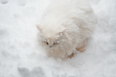Snow (30cm)