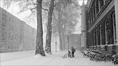 December (HannyB) Tags: winter bw snow blackwhite interestingness utrecht december 100v10f bicycles fp kruisstraat 30faves30comments300views travelsofhomerodyssey