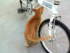 leo-chan neko~ (chinnian) Tags: cloud white bicycle cat neko 2009 foldingbike dahon foldie vd7 vitessed7