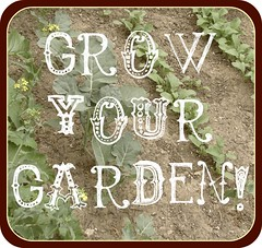 grow your garden: raised beds