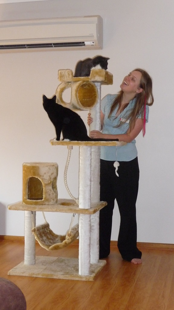 We Haz Tower