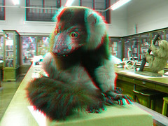 3D Lemur (Little Boffin (PeterEdin)) Tags: red color colour green museum lumix stereoscopic 3d stuffed eyes education edinburgh university gallery cyan anaglyph naturalhistory taxidermy stereo research lemur stuffedanimals labs teaching edinburghuniversity biology naturalhistorymuseum primate opticalillusion anaglyphs taxidermist universityofedinburgh ashworth panasoniclumix stereoimages kingsbuildings 3dpictures dmctz3 tz3 panasonictz3 panasonicdmctz3 ashworthlabs stereopictures anaglyphimages 3danaglyphimages