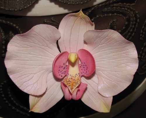 Pink Chocolate by Tammi Luckey - flower