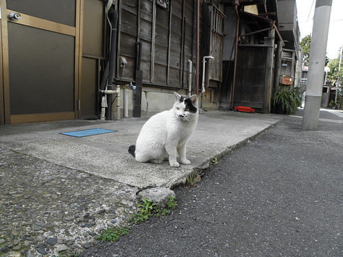 Cats at Yanaka