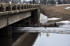Wild rice along 81 (pictureapromise) Tags: county bridge snow tree ice water river flooding flood nd abercrombie roadclosed redriver fargo colfax 2010 richland march15 redriverofthenorth galchutt reflectionredriverflood2010 wildriceriverflood2010 redrivervalley2010
