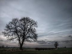 Tree & Hedge (BobJewers) Tags: winter sunset sky tree hedge darlington fields e420 merrybent bobjewers