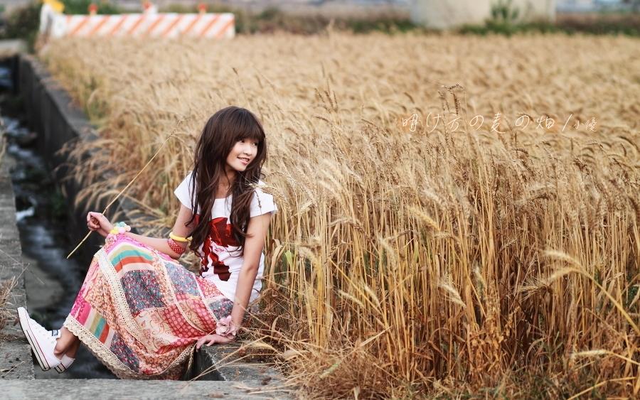 明け方の麦の畑-小優