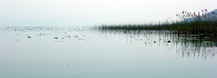 Mirror 3 (Water Lilly) Tags: lake reflection water landscape mirror eau lac paysage voda jezero odraz pejzaz wlhdj