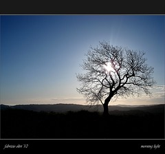 Morning light (Fabrizio Olivi) Tags: light italy tree nature sunrise morninglight italia alba fabrizio lonely albero luce marche solitario 2010 mattino olivi arcevia colorphotoaward artofimages bestcapturesaoi elitegalleryaoi