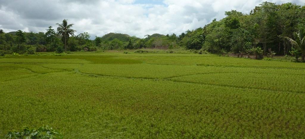 Bohol-Talibon-Chocolate Hills (19)