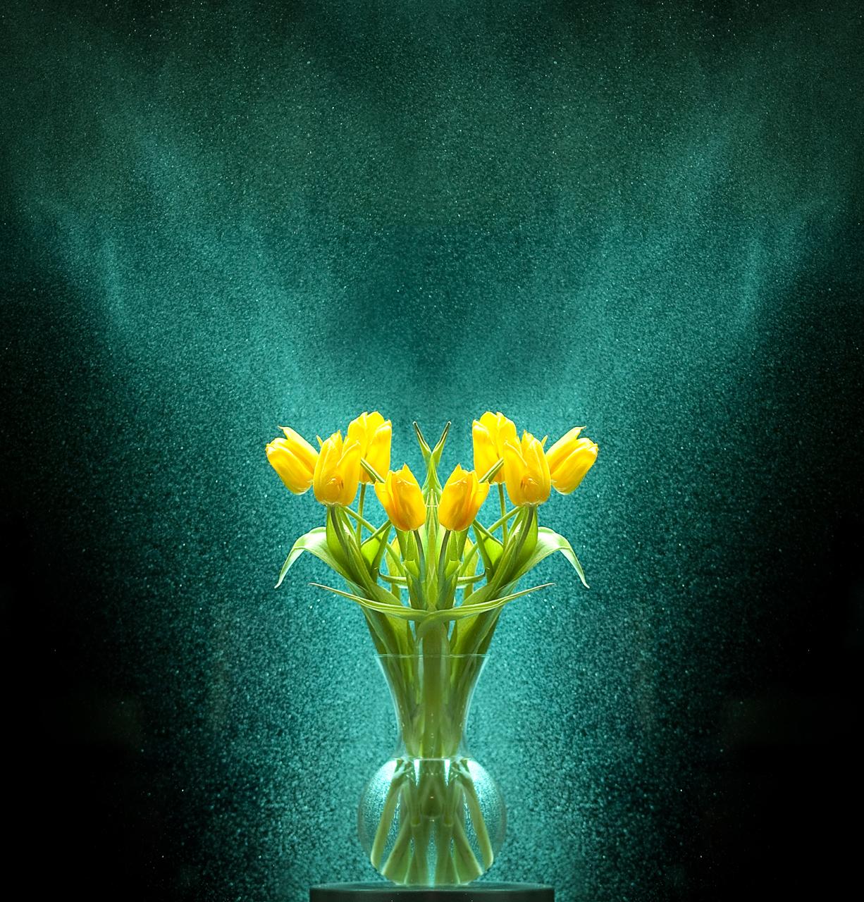 Yellow Tulips, Green Mist (103 of 365)