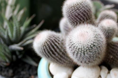 cactus-small