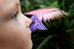 baudchon-baluchon-mindo-orchidees-5