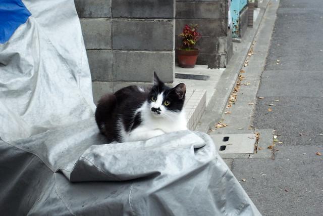 Today's Cat@2011-05-10