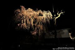 SUV_8784 (Cougar-Studio) Tags: castle nikon kyoto 京都 d3 nijo 二条城 nijocastle 世界遺產 元離宮 20110404
