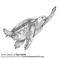 Sea Turtle from Animal Jam with Pencils (drawingtutorials101.com) Tags: sea turtle animal jam national geographic jamaa video games wildworks animaljam sketch sketches sketching pencil how draw