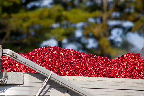 Old Forge Farm - Cranberry load