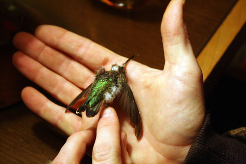 hummingbird frozen in time