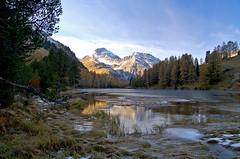Lai da Palpuogna (upsa-daisy) Tags: autumn lake alps schweiz switzerland see suisse herbst alpen svizzera albula preda graubünden grisons graubunden grigioni laidapalpuogna palpuognasee