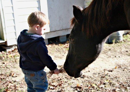 Aaron & Horse